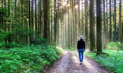 引導式步行冥想:連結感官覺知,體驗當下正念