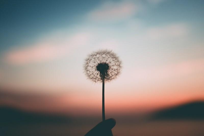【正念生死學- 關懷失落與悲傷】愛的正向連結 一日工作坊 2021